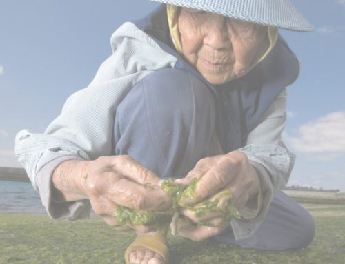 Here's Why Okinawa Fucoidan Will Help You Achieve Longevity
